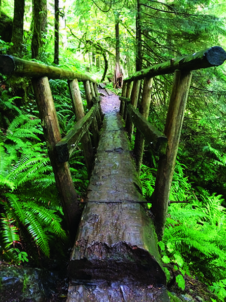 A log bridge spans a little valley on the Boulder River Trail - a very popular hike during Spring Break - located near Arlington, WA. Hikers who have hiked this trail before come back to it for its views of the waterfalls crashing into the river and the picnic spot at the end of the trail.