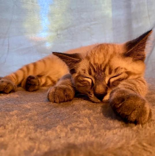 Kylie Elliano's kitten Q-Tip enjoying an afternoon nap.